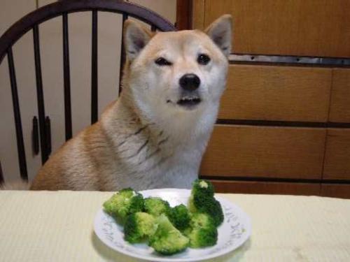 brocolli-dog.jpg