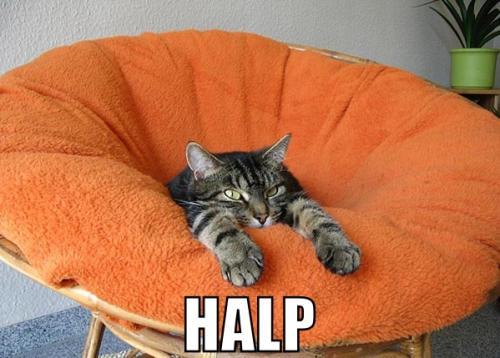 kitty-halp.jpg