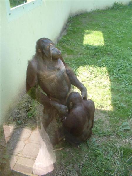 monkey-blow1.jpg