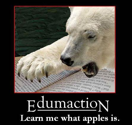 polar bear edumaction Polar Bear Education wtf Humor Forum Fodder Cute As Hell Animals