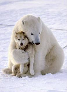 polar-bear-wolf.jpg