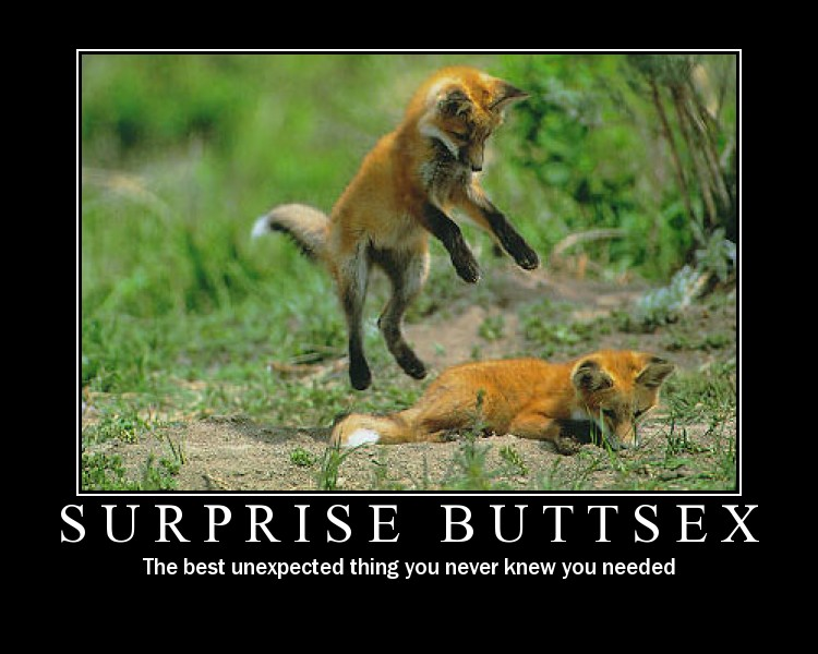 surprise buttsex Surprise Buttsex Motivational Posters Humor Cute As Hell Animals
