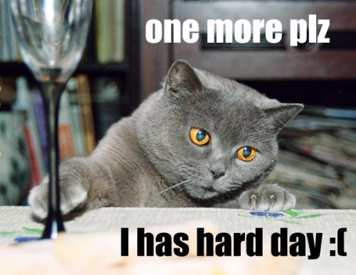 hard-day-kitty.jpg