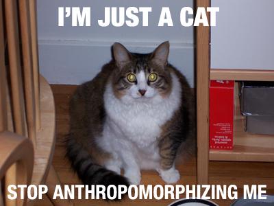 im-just-a-cat.png