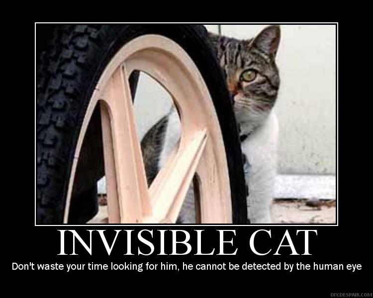 Inviserbly Cat