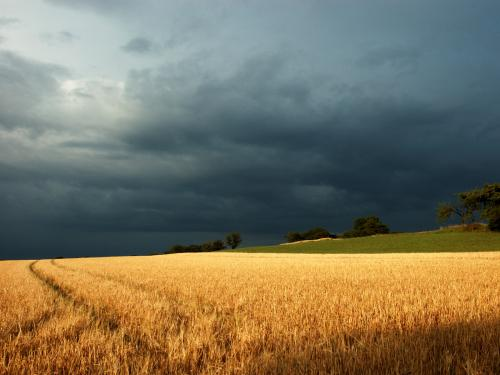 amber-grains-stormy-wallpaper.jpg