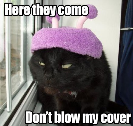 mc10114 Here they come, dont blow my cover wtf Humor Forum Fodder Cute As Hell Animals