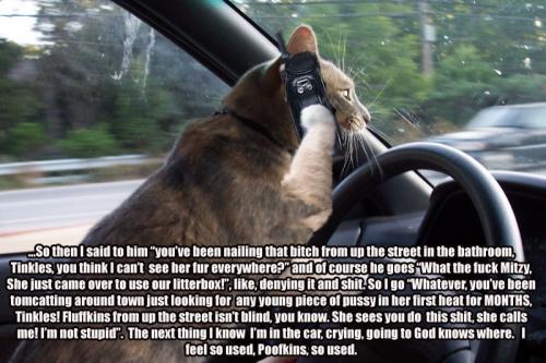 talkative-cat.jpg