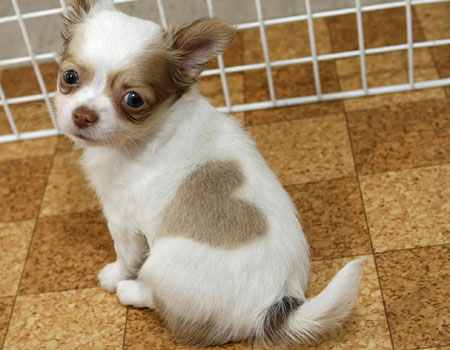 0556157600 Puppy with two hearts wtf Cute As Hell Animals
