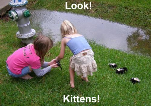 kitties.thumbnail Look! Kittens! lolcats Humor Forum Fodder Cute As Hell Animals