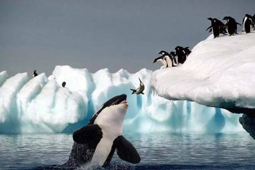 penquin-whale-snack.jpg