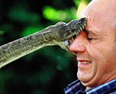 snake-bites-face.jpg