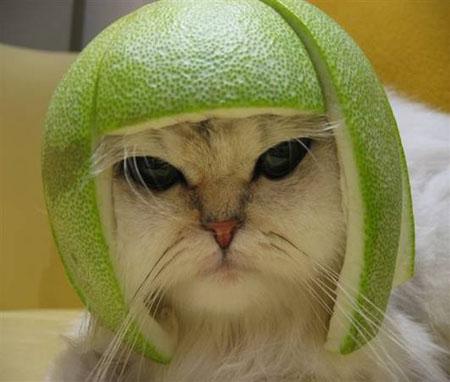 Helmet kitty