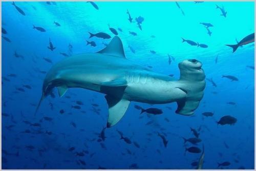 hammer-head-shark.jpg