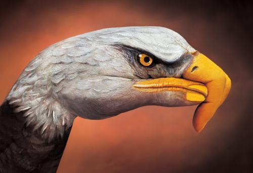 hand-eagle-2.jpg