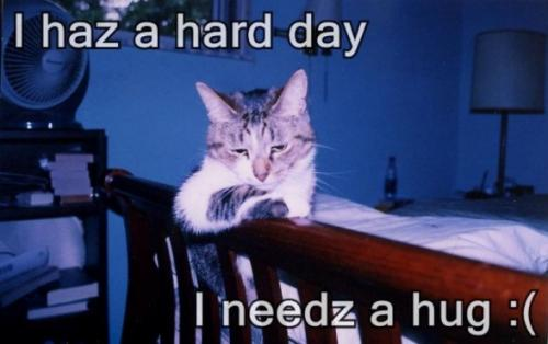 haz hard day need hug.thumbnail I haz a hard day I needz a hug :( lolcats Forum Fodder Cute As Hell Animals