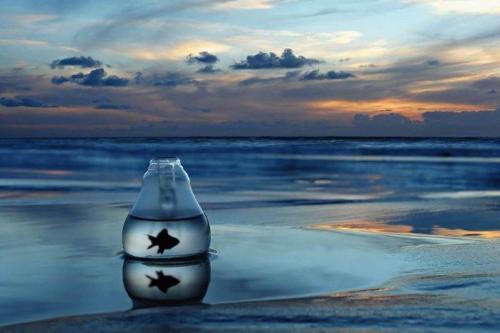 water-bowl-fish-beach.jpg