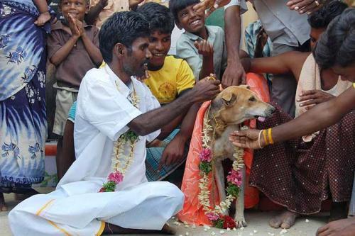doggy-bride