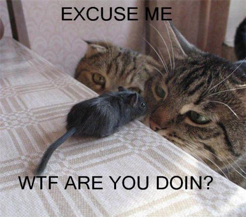 mouse cat.thumbnail Excuse Me   WTF Are You Doing? Humor Forum Fodder