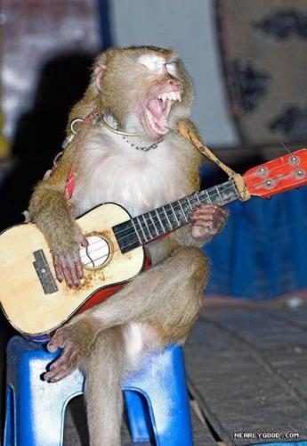 guitar-monkey.jpeg