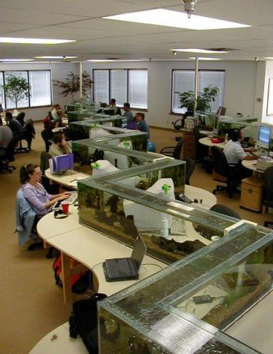 office aquarium.thumbnail Awesome Office Aquarium wtf