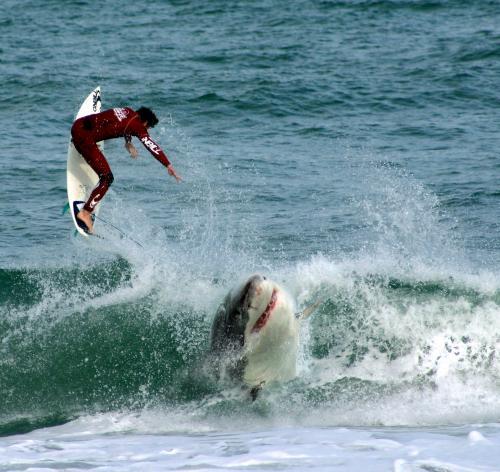 shark-vs-surfer.jpg