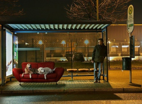 doggy bus stop 500x366 doggy bus stop Humor Cute As Hell Animals