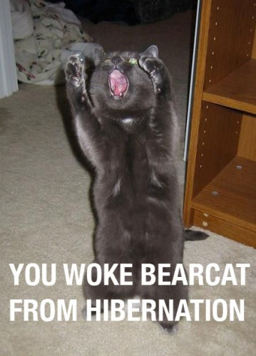 you woke bearcat from hibernation 359x500 you woke bearcat from hibernation lolcats Humor