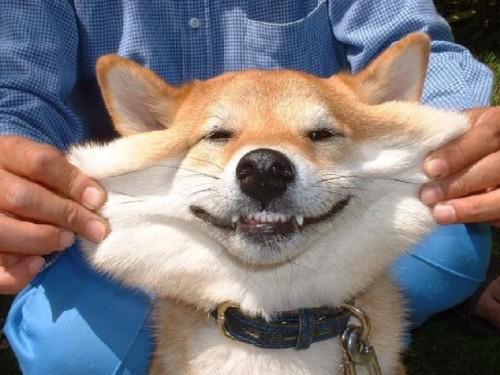 doggy cheek strech