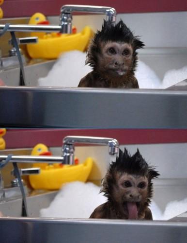 monkey bath
