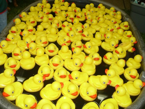 ducks - hundreds of them