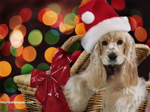 christmas dog 500x375 christmas dog xmas X Mas Cute As Hell Animals