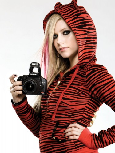 avril lavigne is a tiger photographer 374x500 Avril Lavigne is A Tiger Photographer Sexy Music