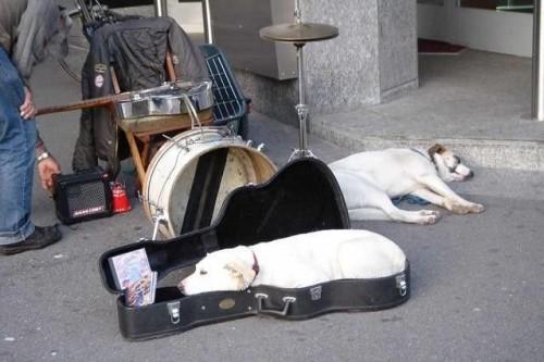 guitar dog bed