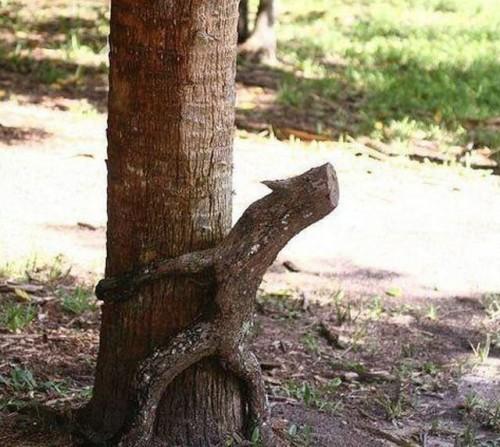 tree humping branch
