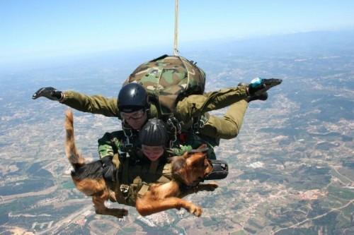 Air Jump K9
