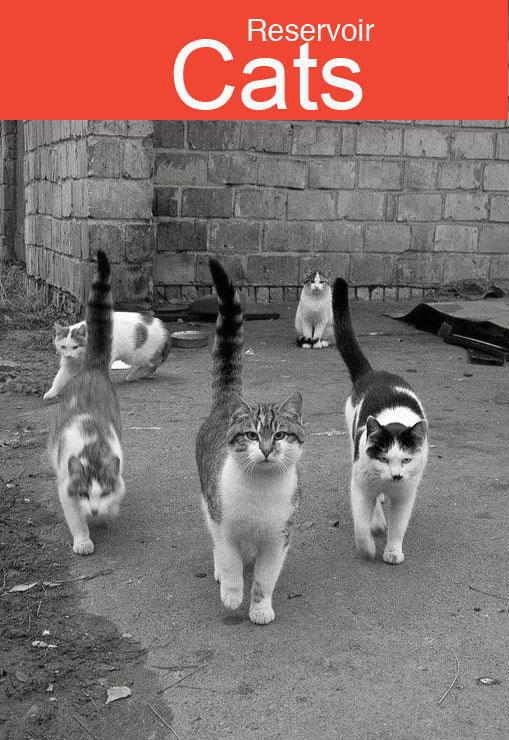 reservoir-cats
