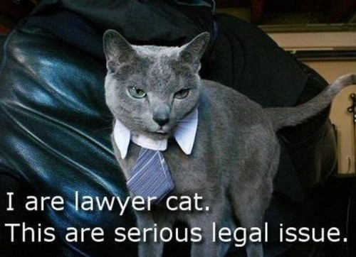 I are lawyer cat - this are serious legal issue