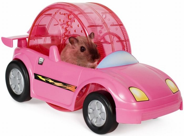 hamster car hamster car Toys Cute As Hell Animals