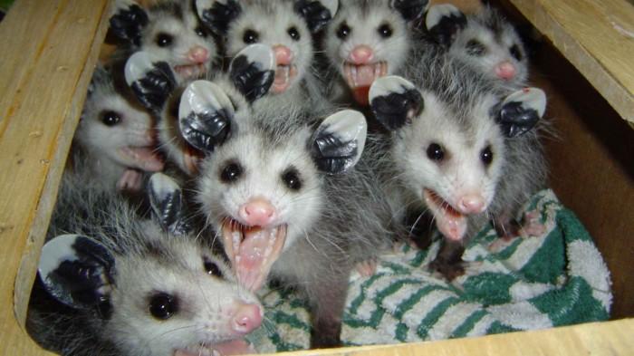plastic possums