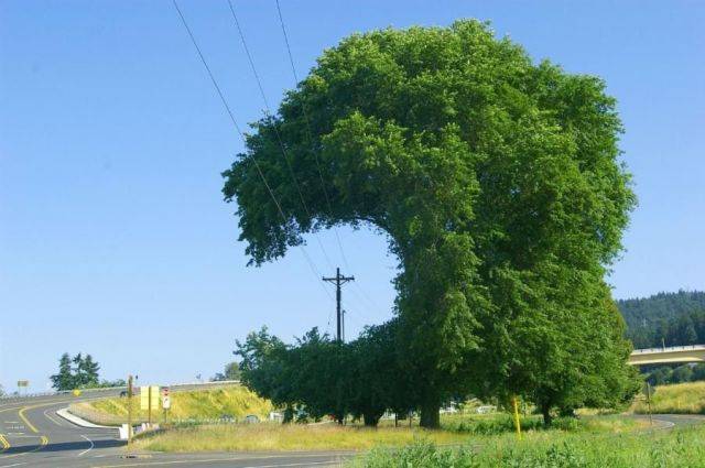 creative tree pruning creative tree pruning wtf Nature
