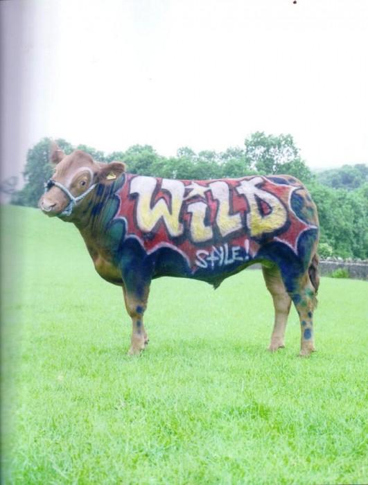 wild style cow