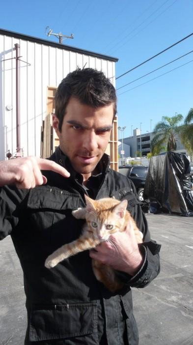 syler vs cat