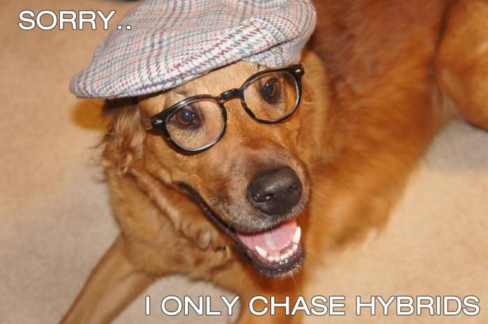 hipster dog