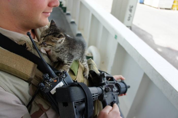 military kitten