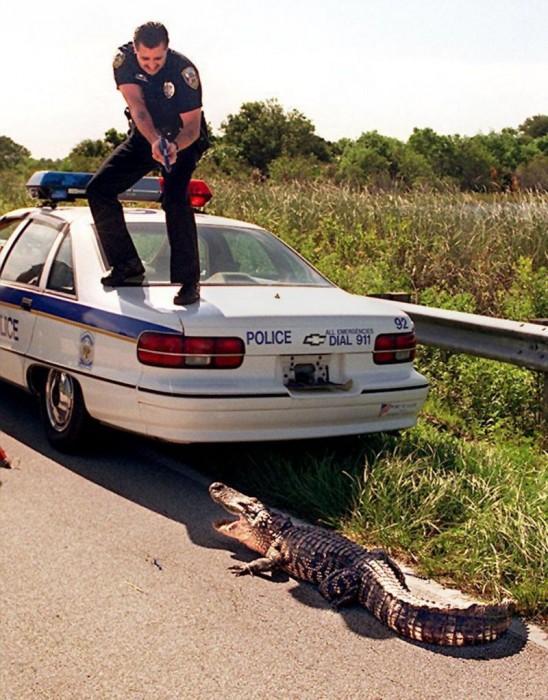 Alligator Cop