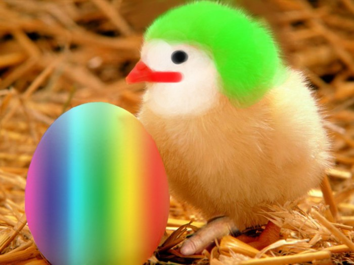 crazy easter chick