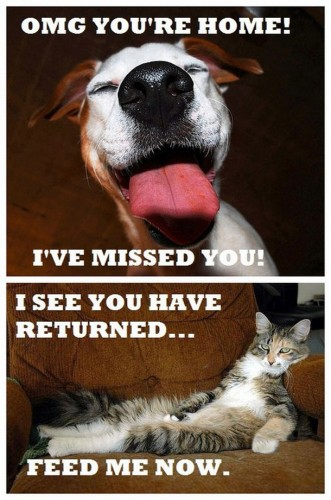 cats vs dogs - when you come home