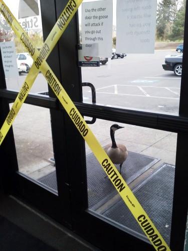 bad ass goose