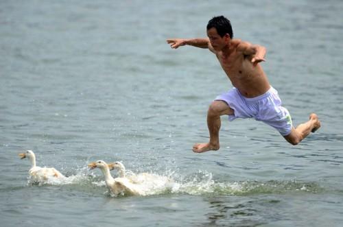 duck runner
